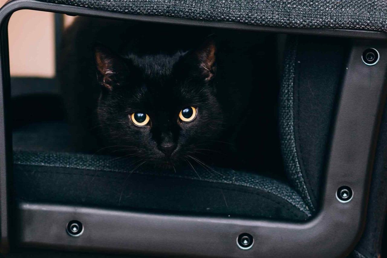 PETS cats5