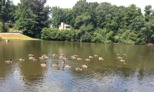 chapell-hill-lake