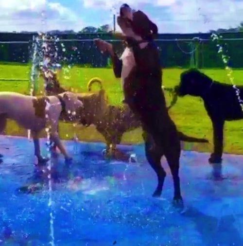 splash-pad-for-dogs