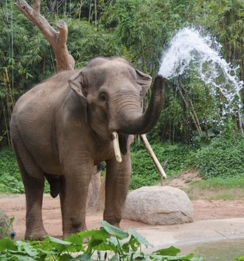 zoo-atlanta-ga-th
